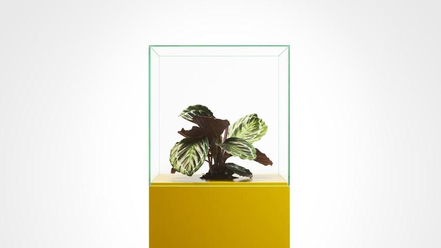 Etnografiska museet sätter fokus på överkonsumtionen med hjälp av en blomma