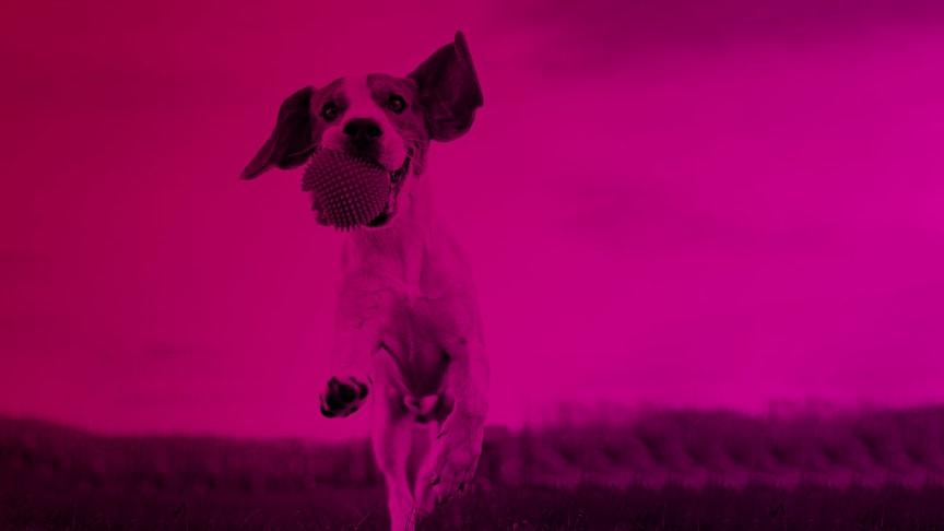 Hundens vecka 2020