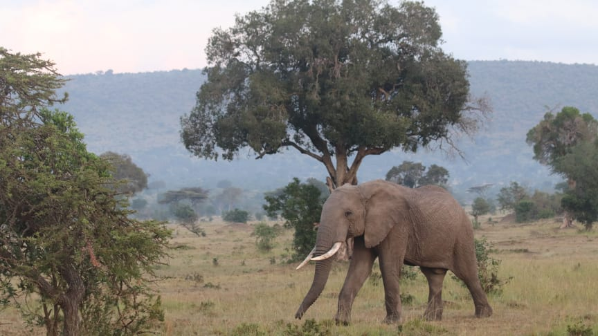 Borås Djurpark är bland annat delaktiga i olika projekt i Masai Maraområdet i Kenya.