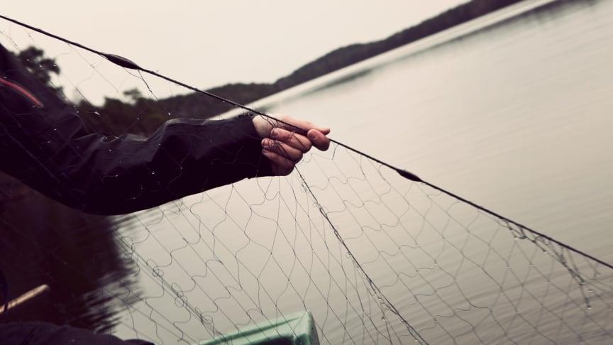 Foto Maja Kristin Nylander/Havs- och vattenmyndigheten