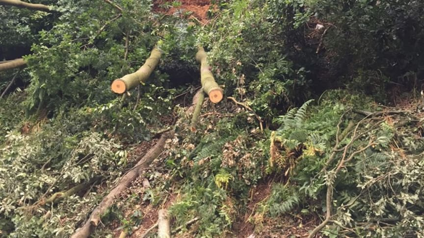 The fallen trees on the Cross City line during removal