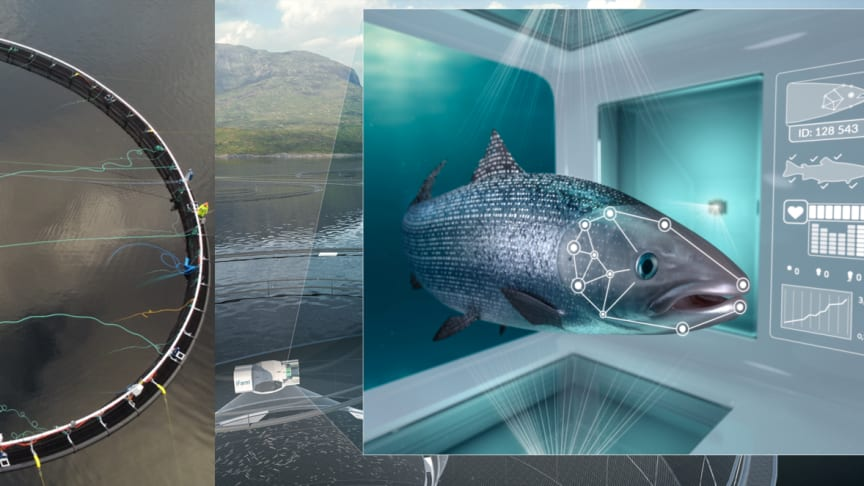 The iFarm five-year project is the first of its kind and will allow for an individualized fish approach to salmon farming. Now, the first fish have been transferred in Cermaq's iFarm.