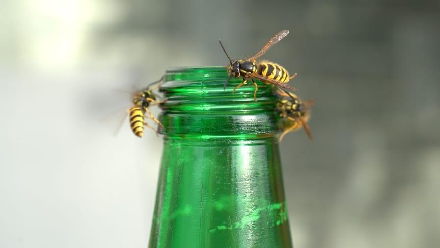 Vänd insekternas intresse åt ett annat håll!