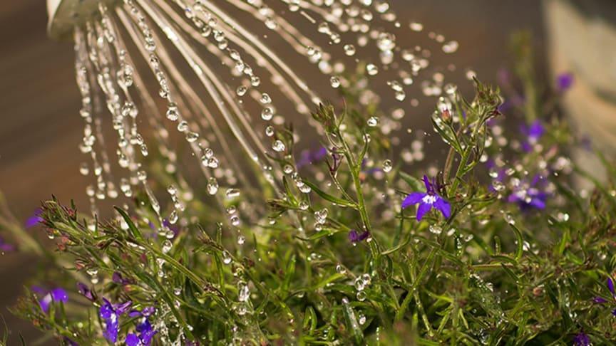 Vattna din växter med vattenkanna så går det åt mindre vatten.