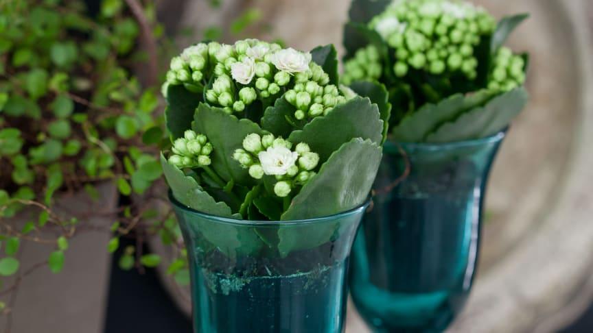 Säsongsinspiration - charmiga miniväxter