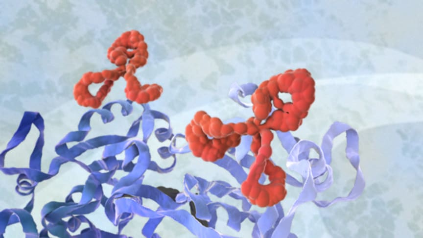 Over the last 30 years, Agrisera has produced thousands of custom monoclonal and custom polyclonal antibodies for academic research worldwide as well as industry, diagnostics, and pharma.