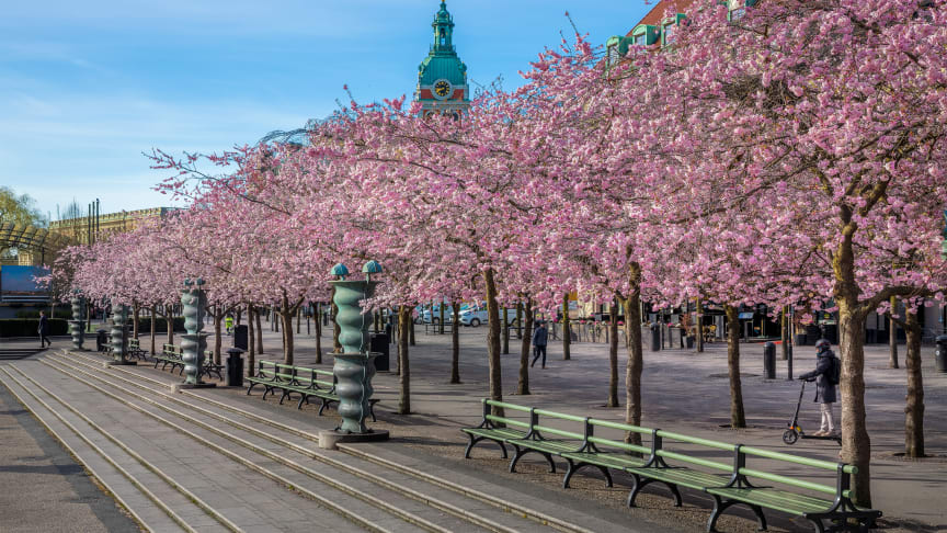Nolas backed benches for Kungsträdgården in Stockholm. Photo by Jann Lipka.