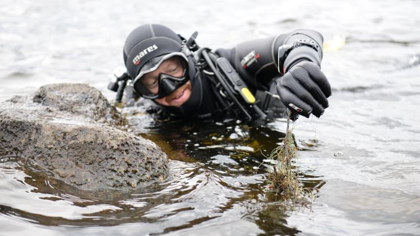 Dykklubben Öckerödorarna hjälper till att rensa Säveån.