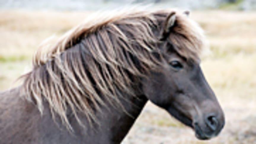 Hästpsykologi