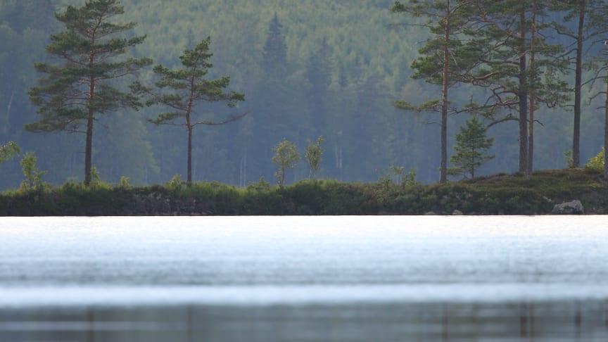Priset på skogsmark fortsätter uppåt och sju av tio skogsägare tror på stigande fastighetspriser de kommande tre åren.