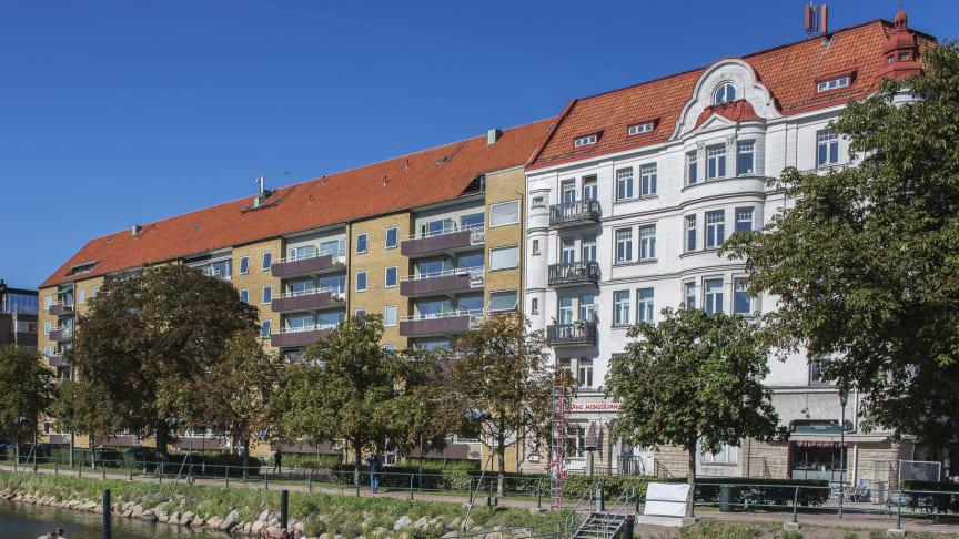 Hästkastanjer på Södra Promenaden. Foto Lars Bendroth