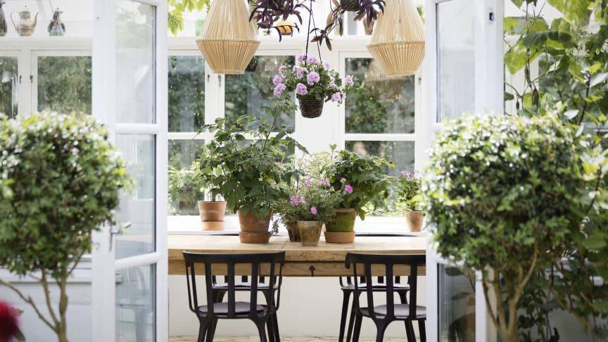 Uterum är sköna platser på våren, för både människor och växter. Bild: Pelargonium for Europe