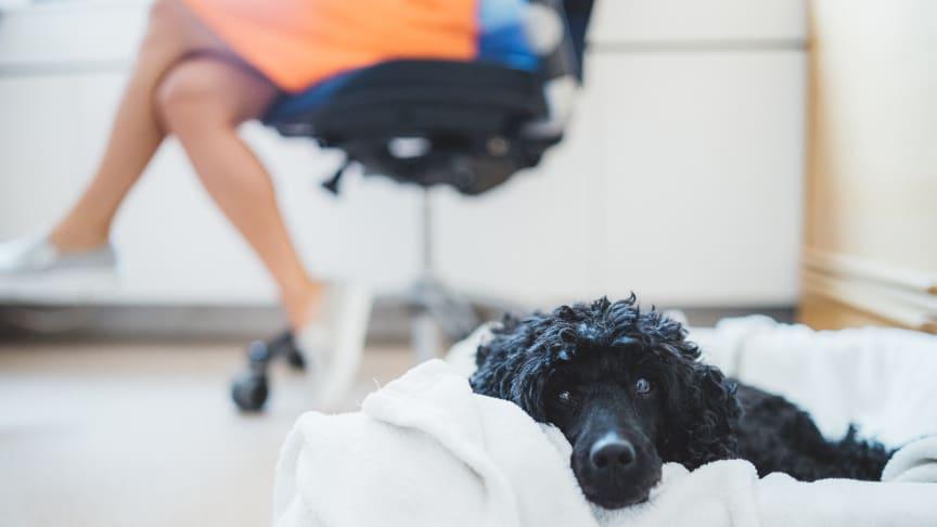 På Doggy i Vårgårda kan man vara säker på att minst tre hundar är med på kontoret varje dag.