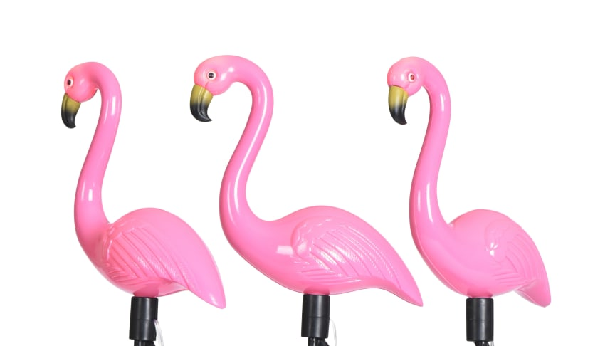 Solcelleslynge_Flamingos