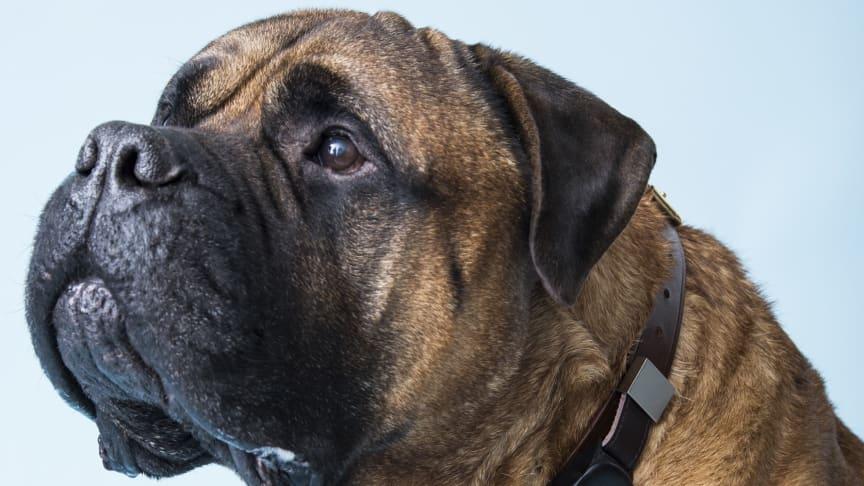 Telenor gör det möjligt att ringa till sin hund