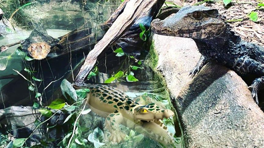 Vom 07. – 26. Juli 2020 laden PLAYMOBIL und der Reptilienzoo Forchtenstein zum großen Zoo-Quiz ein