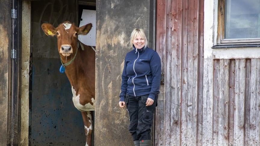 Kosläpp på Torsta i Ås i Jämtland. Torstas instruktör på gårdsbruket, Ida Östling, väntar på att en ko ska gå ut. Foto: Torsta AB