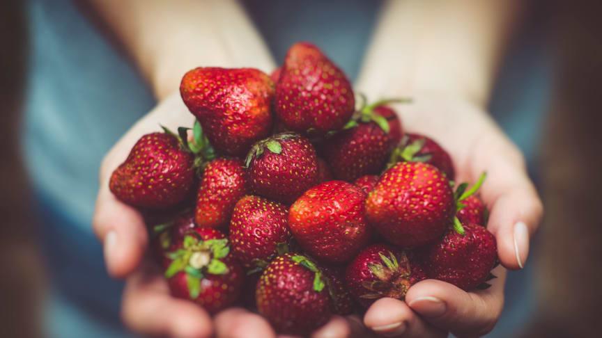 Jordbær har kort holdbarhet, men det finnes livreddende tiltak som gjør at de varer lenger, ifølge Opplysningskontoret for frukt og grønt. Foto: Pexels, Pixabay