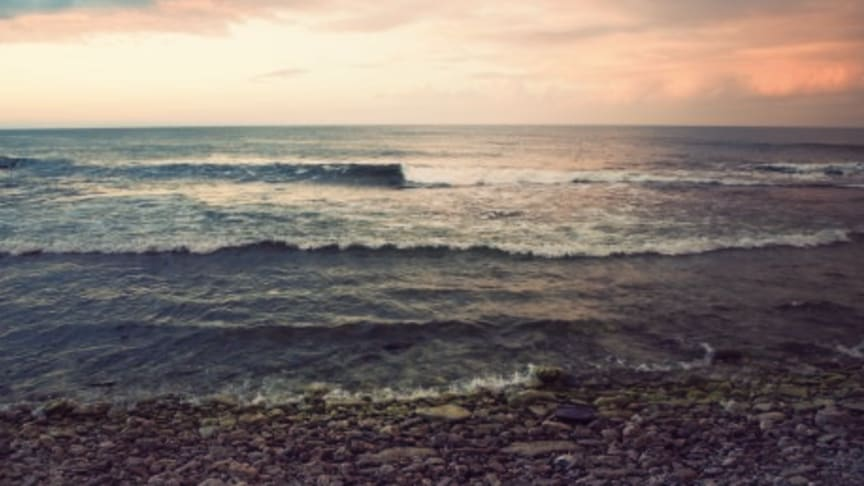 Björn Risinger: Larmen om miljögifter i Östersjön måste tas på allvar