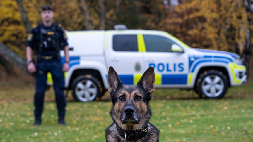 Årets polishund Izor tillsammans med sin förare Erik Karlsson. Foto: Måns Engelbrektsson