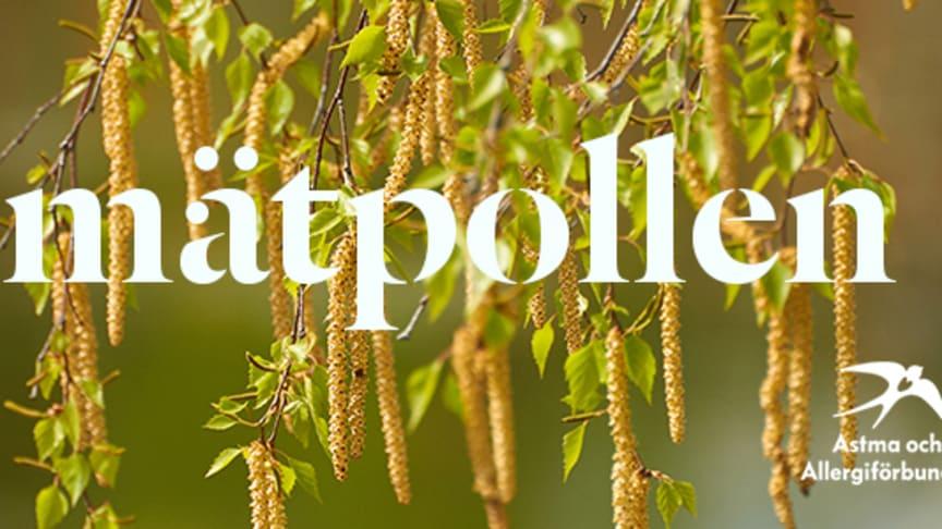 Bild på björkhängen med pollen och texten #mätpollen