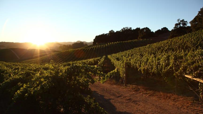 Truchard Vineyards Pinot Noir & Chardonnay er tilbake på lager