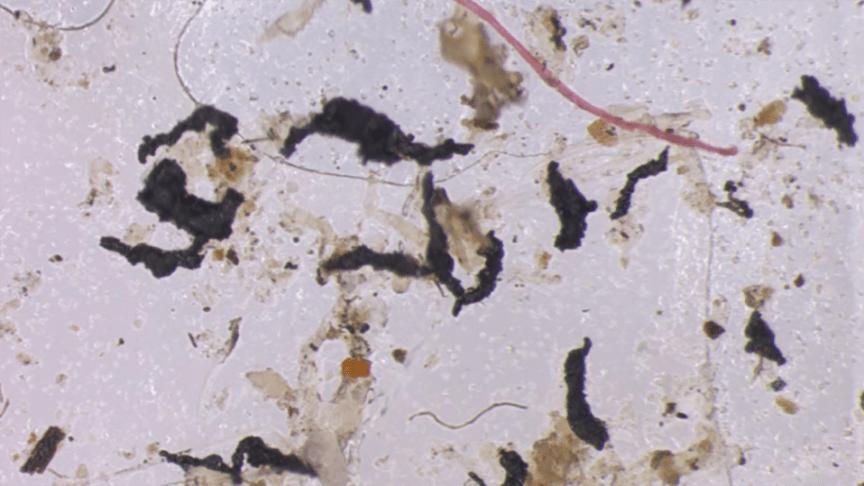 Ny studie påvisar mikroplast i luften