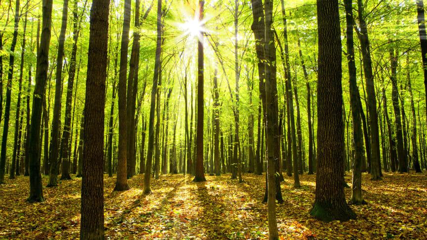 For hvert serviceeftersyn der bookes online og udføres på et AutoMester E+ værksted, planter AutoMester E+ et træ i Danmark i samarbejde med organisationen Plant et Træ.