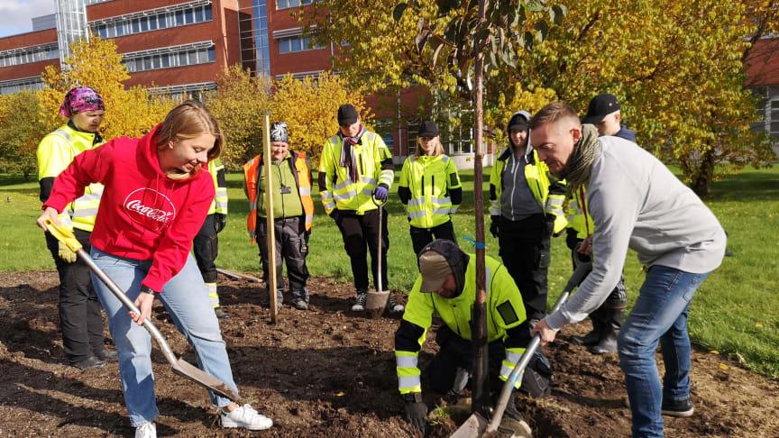 Sara Holmström Suomen Coca-Colalta, Timo Mikkola Sinebrychoffilta ja Keski-Uudenmaan koulutuskuntayhtymä Keudan opiskelijat istuttamassa Coca-Cola-puistikkoa Keravalle.