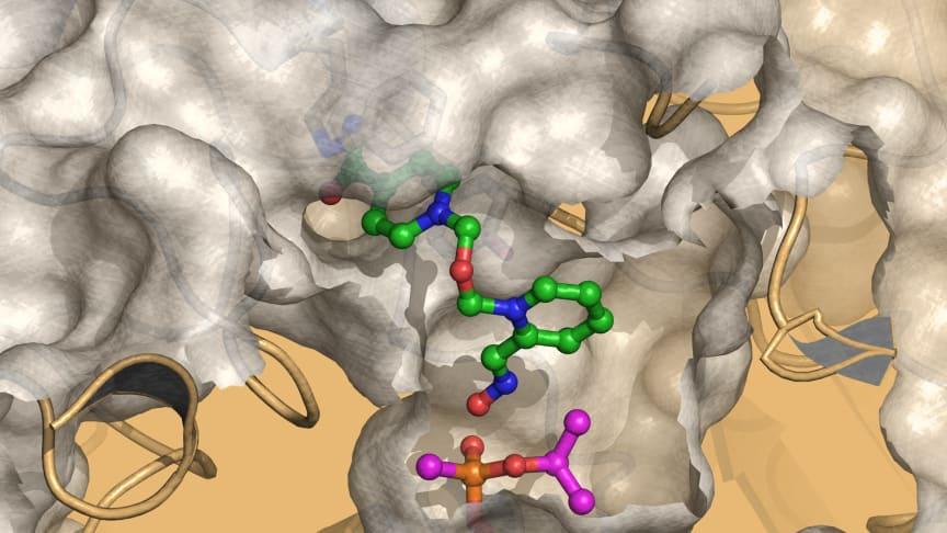 Nya läkemedel mot nervgaser i sikte
