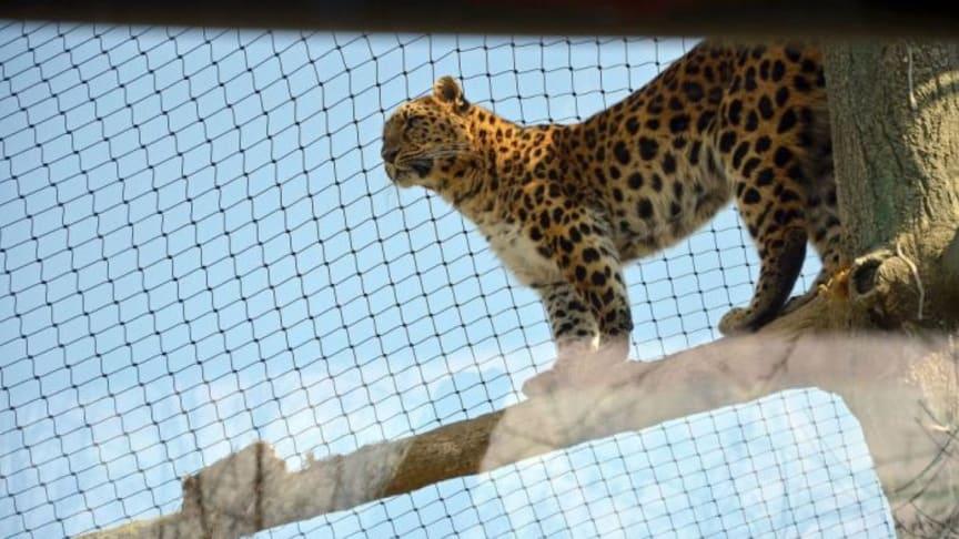 Feierliche Einweihung des Leoparden-Tals im Zoo Leipzig