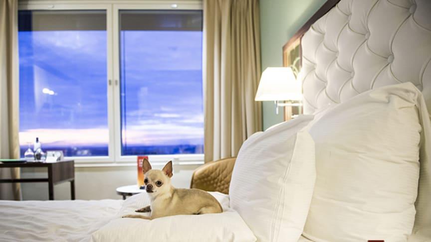 Clarion Hotel Arlanda Airports koncept Happy Dog är Skandinaviens mest innovativa inom gästservice
