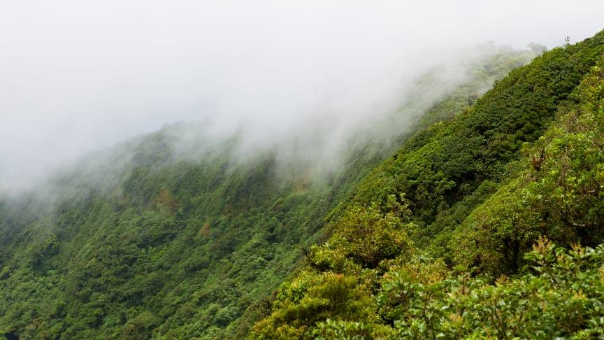 Genetablering af skov er en af de bedste klimaløsninger.