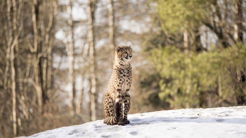 Borås Djurpark: exotiska djur i snö
