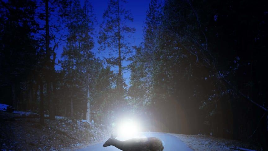 En kombination av längd och bredd – rätt ljusbild förebygger viltolyckor