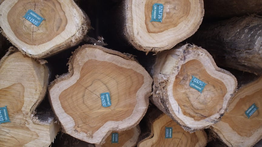Ein Investment in Teakholz von Life Forestry Switzerland bringt zweistellige Renditen. Bild: Lifeforestry