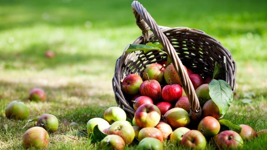 5 sätt att tillvarata höstens äppelskörd