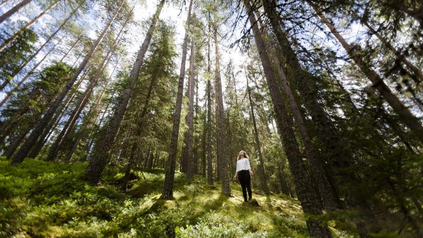 Skogsbading i Dalarna. Foto: Matilda Holmqvist