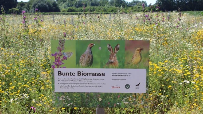 """Projektfläche """"Bunte Biomasse"""" mit Beschilderung (Autor: Werner Kuhn)"""