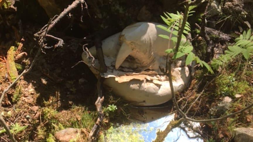 """""""Narcissus i skogen"""" av Gunilla Dovsten - ett av verken som ställs ut på Konstrundan i Hörken,"""