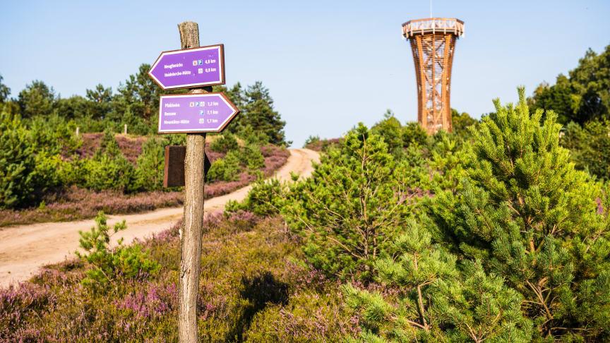 """Der """"Heide-Erlebnisweg"""" führt zum Heideturm inmitten der Kyritz-Ruppiner Heide. Foto: Markus Tiemann."""