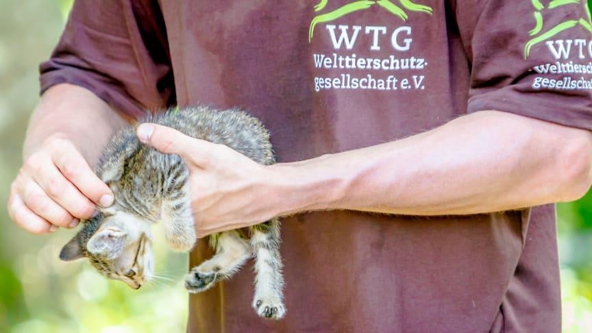 Foto: geckophoto.com