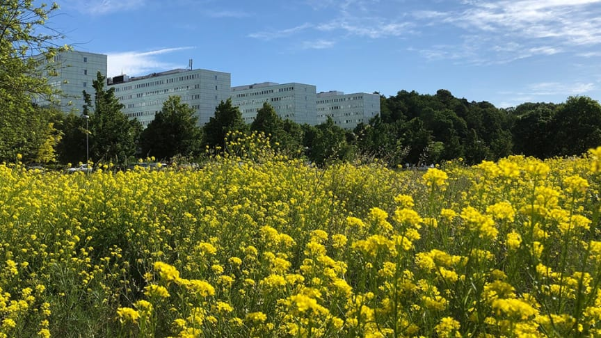 Södra huset vid Stockholms universitet, Campus Frescati. Foto: Per Larsson