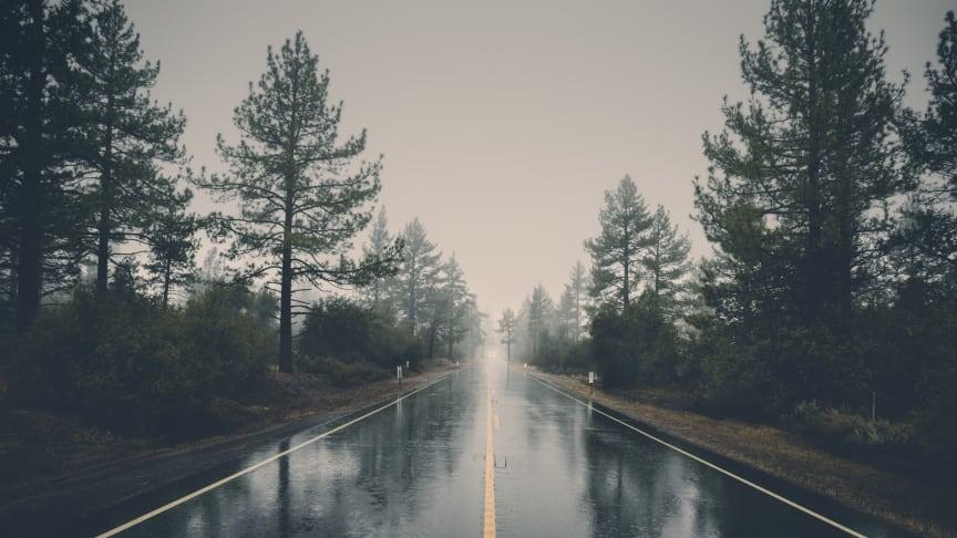 forest-haze-hd-wallpaper-39811 (1)