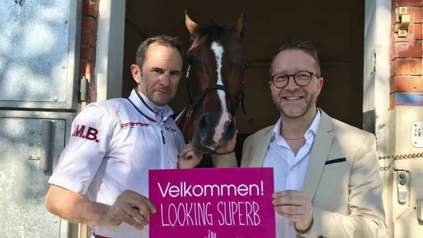 Looking Superb blir inbjuden till Elitloppet 2019. Foto: Solvalla.