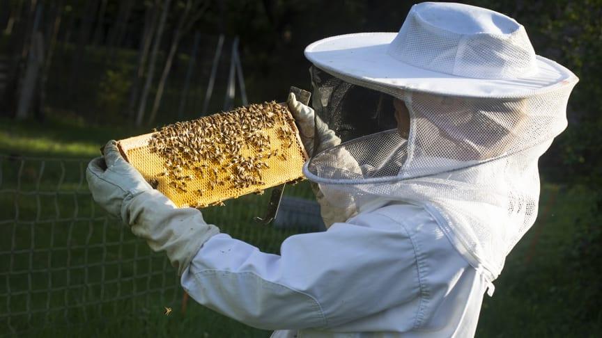 Med ställningstagandet går man dessutom emot flera andra EU-länder, där man konkret arbetar för att minska giftanvändningen med särskild omtanke om insekterna inklusive bina.