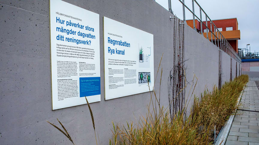 Gryaab har flera exempel på hållbar dagvattenhantering på Ryaverket. Här en regnrabatt i höstskrud, som minskar mängden dagvatten till reningsprocessen. Foto: Emelie Asplund