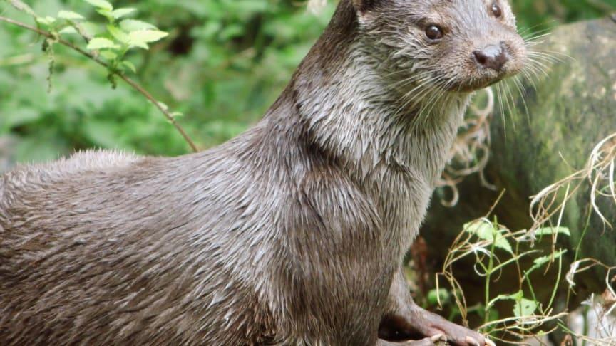 Veolia Stiftung fördert im UNESCO-Biosphärenreservat Schaalsee den Schutz von Wasserressourcen und Biodiversität