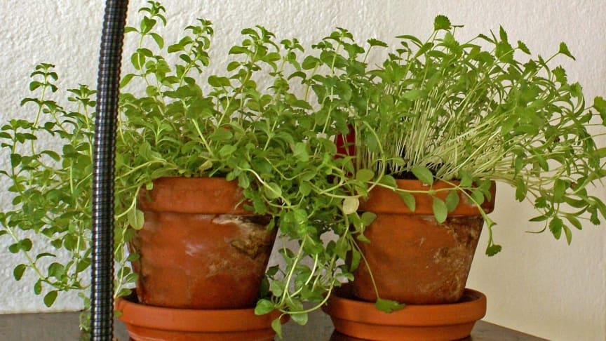 Odlingslampa med LED-Ljus, ger dina växter kraft att växa
