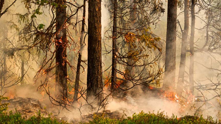 Naturvårdsbränning nära Storuman våren 2020. Foto: Emelie Fredriksson